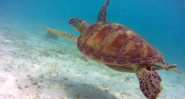 Lugares para nadar con tortugas en Filipinas