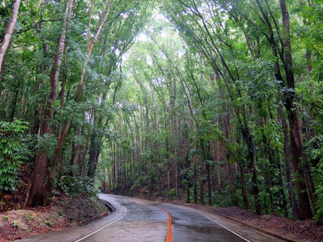 Bohol Forest