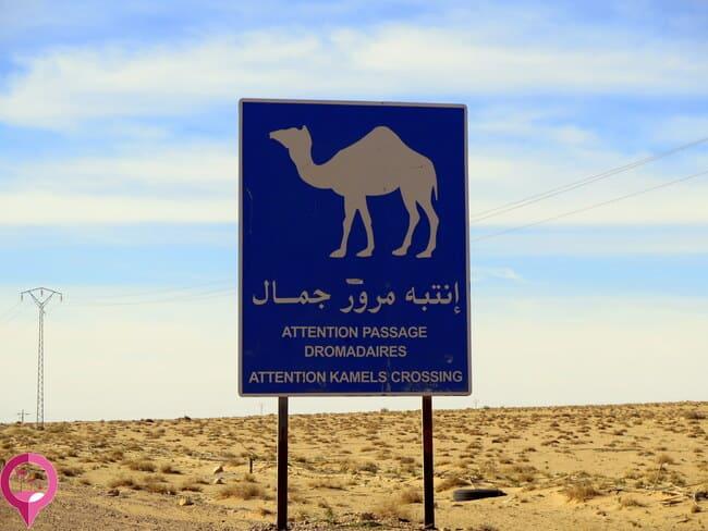 Curiosos carteles en Túnez