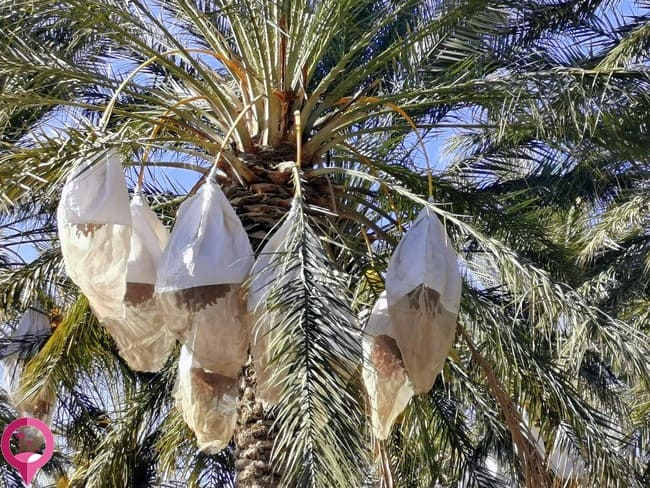 Economía en el sur de Túnez
