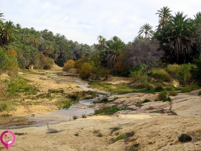 Oasis en la frontera de Túnez y Argelia