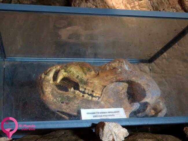 Osos fósiles en los Montes Bucegi